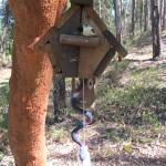 BirdListening - Monte Real_1